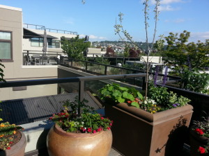Commercial Landscaping Cascadia Edible Landscapes - Rooftop landscaping