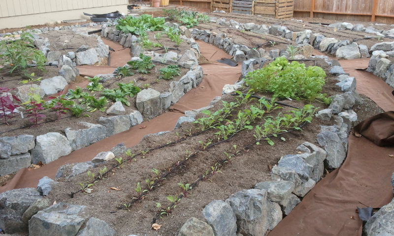 Raised Beds Natural Rock And Irrigation System